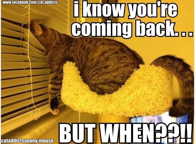 Photo caption - www.facebook.com/cat.addicts iknow you're coming back.. BUT WHENO cataddictsanony-mouse