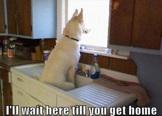 Mammal - I'll wait here till you get home