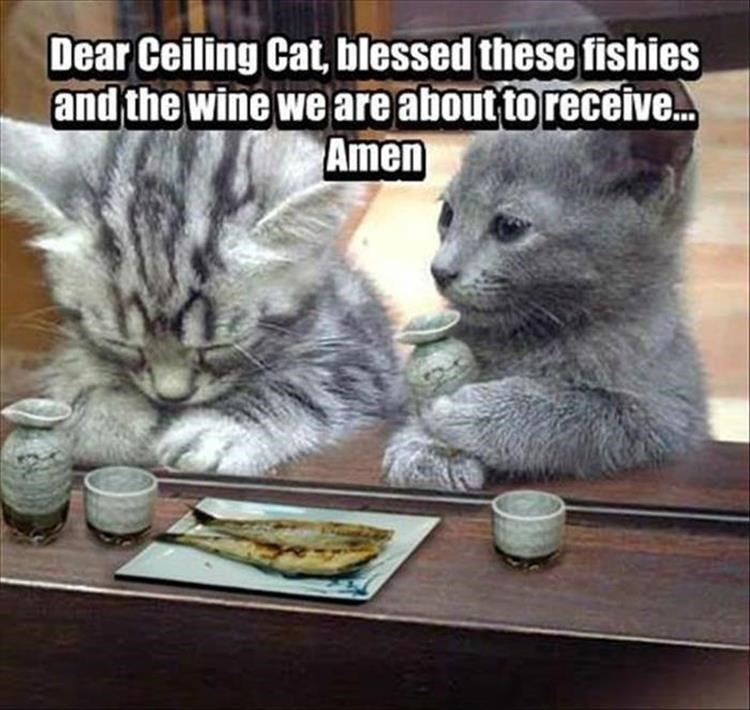 caturday - Cat - Dear Ceiling Cat, blessed these fishies and the wine we are about to receive.. Amen