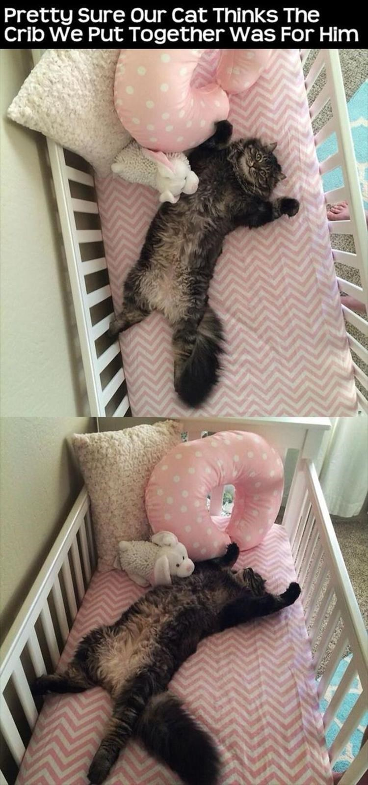 caturday - Pink - Pretty sure Our Cat Thinks The Crib We Put Together Was For Him