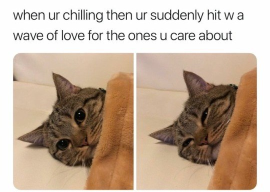 caturday - Cat - when ur chilling then ur suddenly hit w a wave of love for the ones u care about