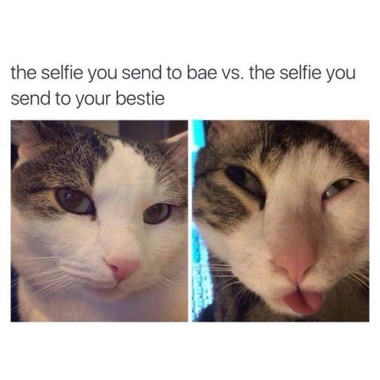 caturday - Cat - the selfie you send to bae vs. the selfie you send to your bestie