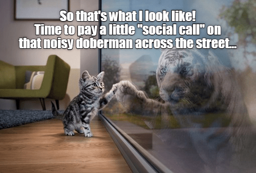 """meme - Cat - So that's what I look like! Time to pay a little """"social call on that noisy doberman across the street."""