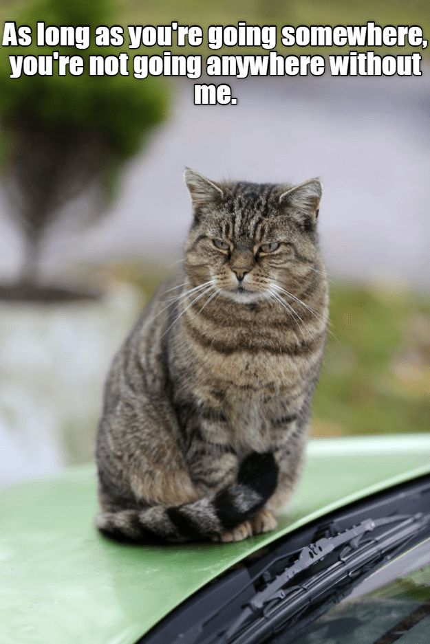meme - Cat - As long as you're going somewhere, you're not going anywhere without me.