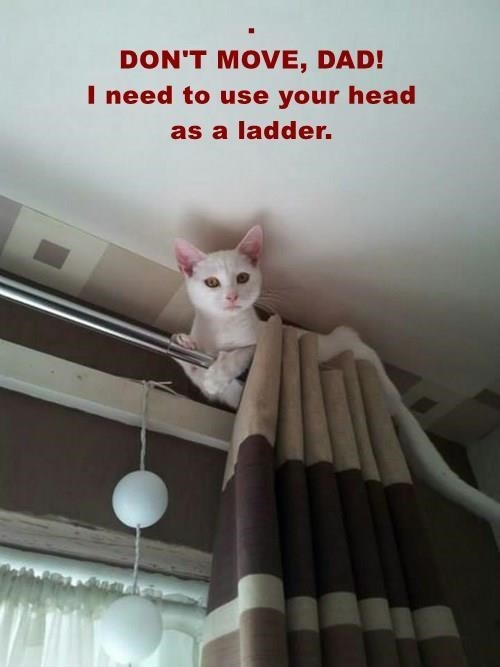 meme - Cat - DON'T MOVE, DAD! I need to use your head as a ladder.