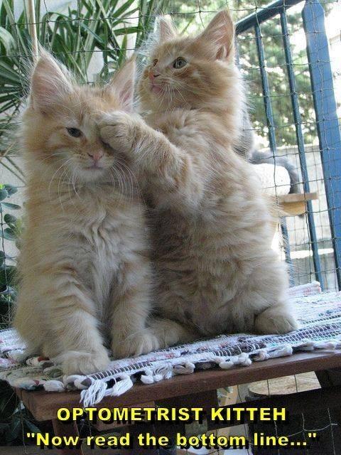 """meme - Cat - OPTOMETRIST KITTEH """"Now read the bottom line..."""""""