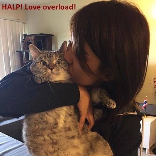meme - Cat - HALP! Love overload!