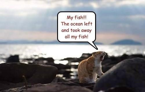 meme - Text - My fish!! The ocean left and took away all my fish!