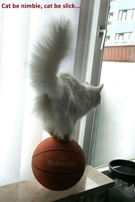 meme - Tail - Cat be nimble, cat be slick... Baket Bn