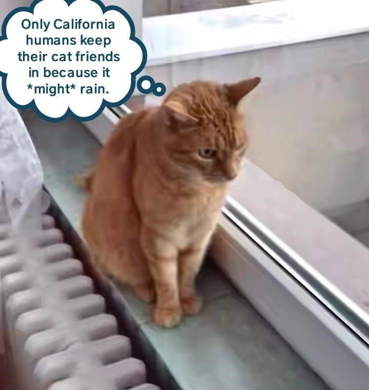 meme - Cat - Only California humans keep their cat friends in because it *might* rain