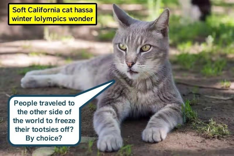 meme - Cat - Soft California cat hassa winter lolympics wonder People traveled to the other side of the world to freeze their tootsies off? By choice?