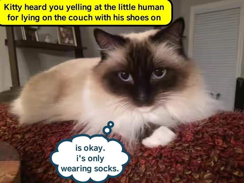 meme - Cat - Kitty heard you yelling at the little human for lying on the couch with his shoes on is okay i's only wearing socks.