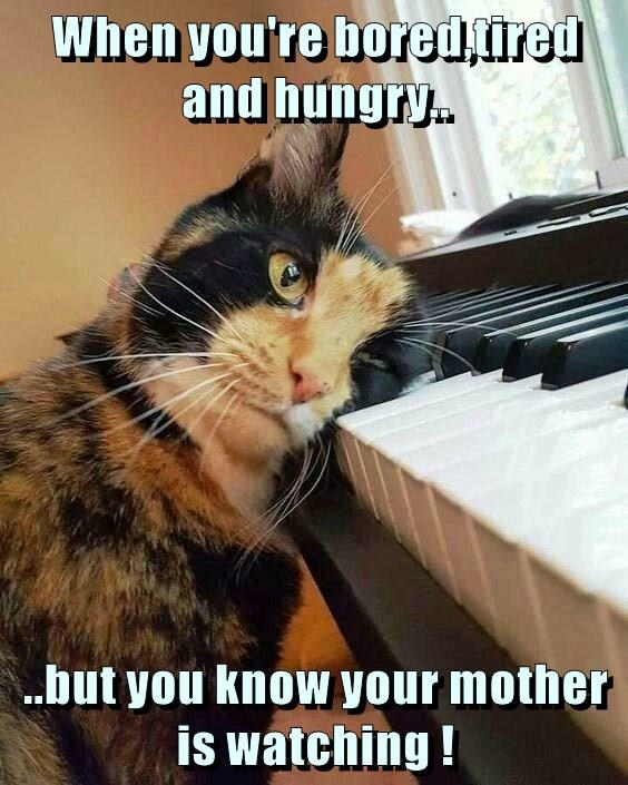 when you're bored,tired and hungry lolcats lol cat memes