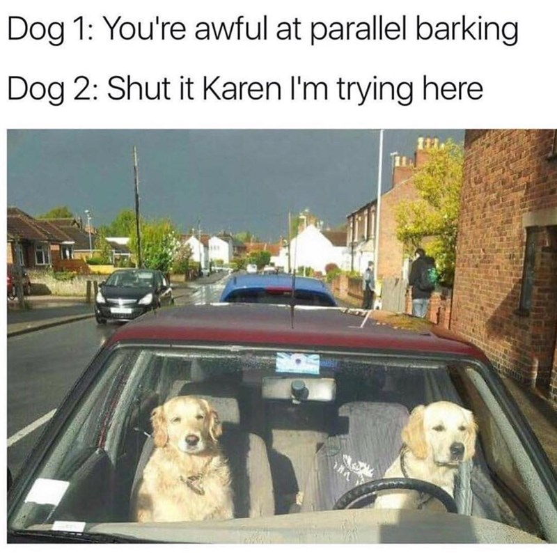 Funny meme about dogs parking.