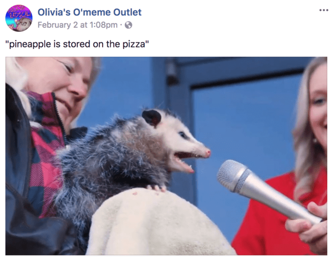 interview possum is a meme with something to say memebase funny