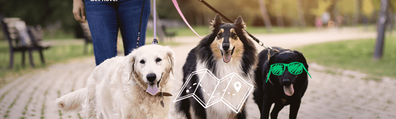 guided walks for dogs, dog walks