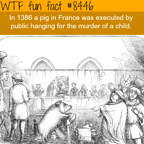 Cartoon - WTF fun fact #8446 In 1386 a pig in France was executed by public hanging for the murder of a child.