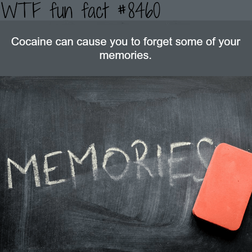 Text - WTF fun fact #8460 Cocaine can cause you to forget some of your memories. MEMORIES