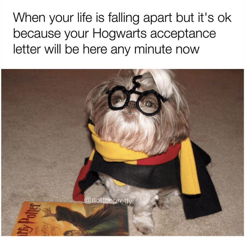 Funny meme of a dog that looks like Harry Potter
