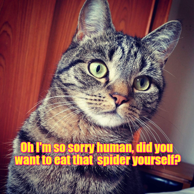 Oh I\'m so sorry human, did you want to eat that spider yourself?