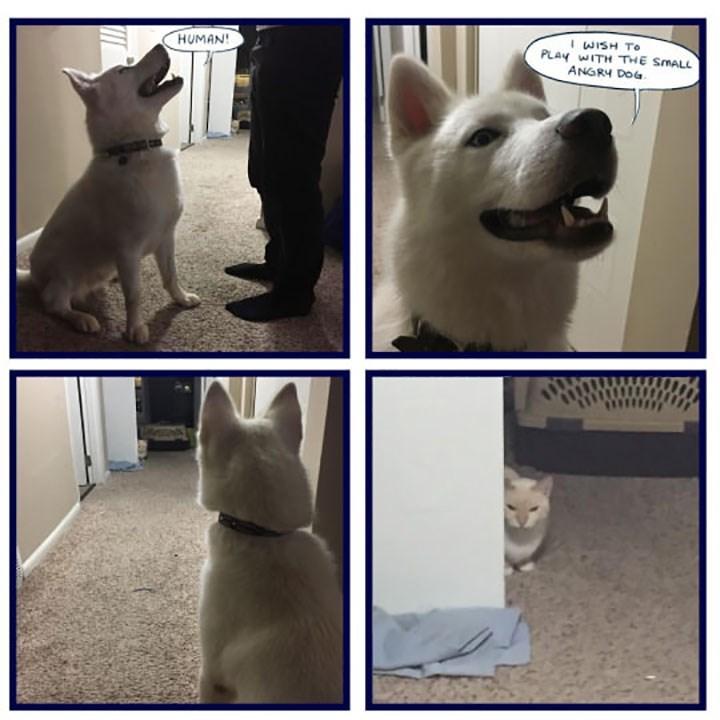 Dog - I WISH TO PLAY WITH THE SMALL ANGRY DOG HUMAN!
