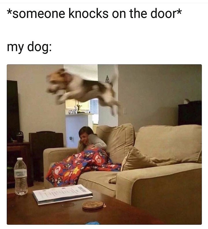 Text - *someone knocks on the door* my dog: AP