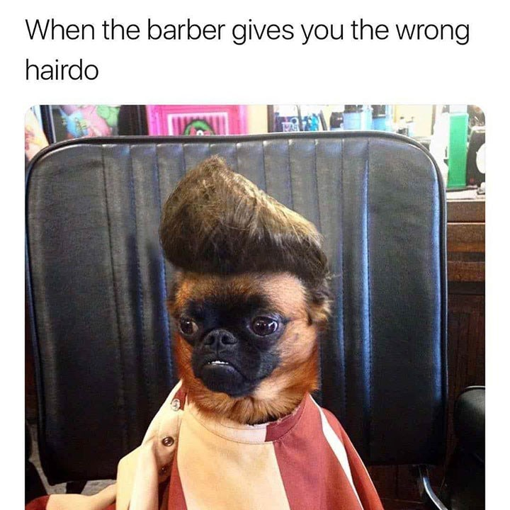 Dog - When the barber gives you the wrong hairdo