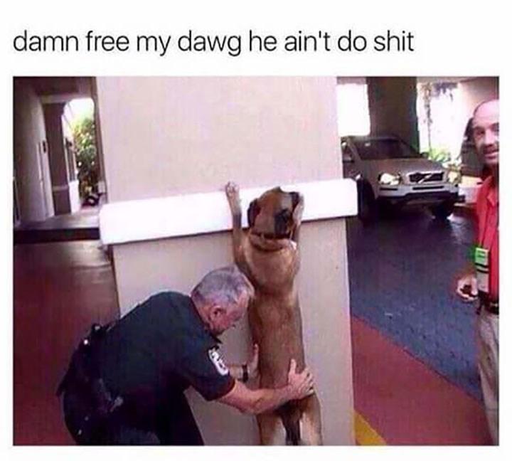 Dog - damn free my dawg he ain't do shit