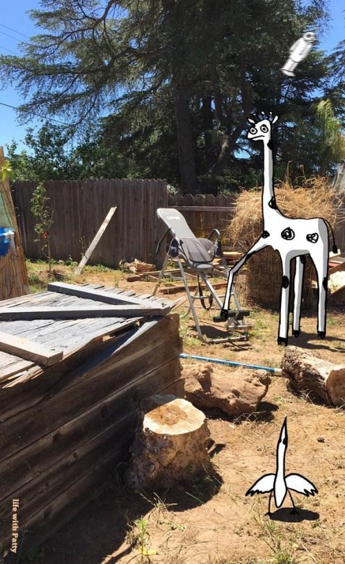 Backyard - life with Patty