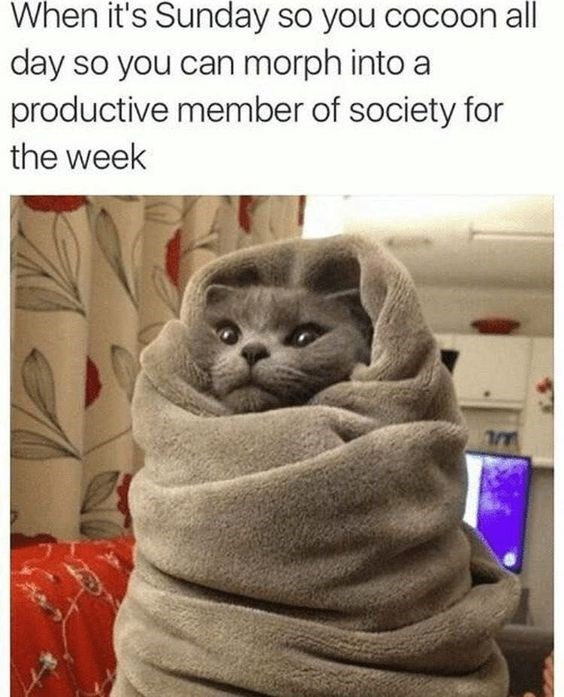 Sunday meme about powering up for the week with pic of a cat snuggled up in blankets