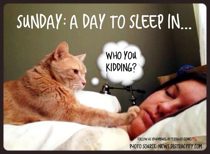 Sunday meme about cats not letting you sleep in