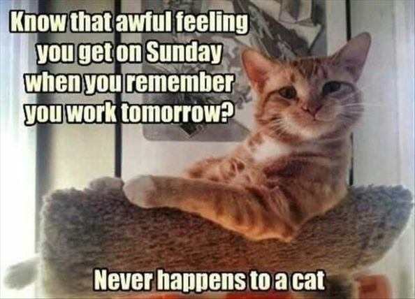 Sundays - cat meme about cats not caring about the weekend ending