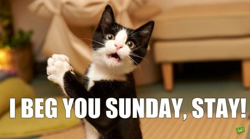 Sunday meme with a cat begging for the weekend to continue