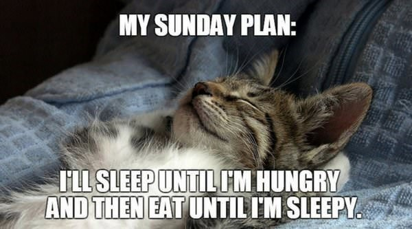Sunday meme about cats schedules with pic of a sleeping cat