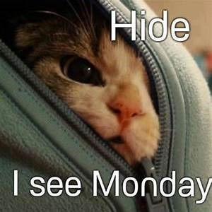 Sunday meme about hiding from Monday with a cat peeking from inside a zipper