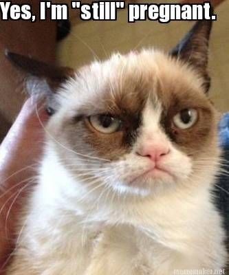 """Cat - Yes, I'm """"still"""" pregnant. air taqi"""