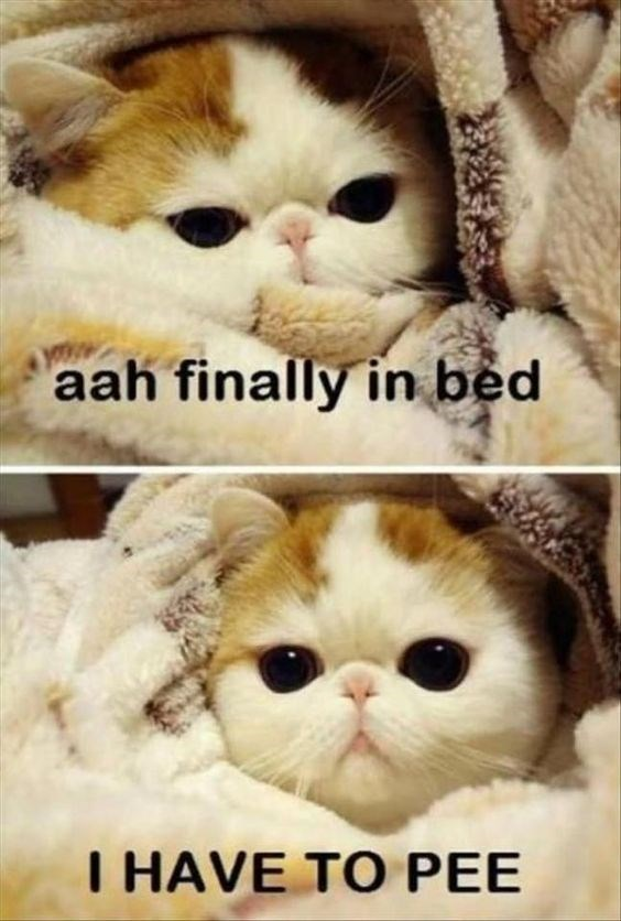 Cat - aah finally in bed I HAVE TO PEE