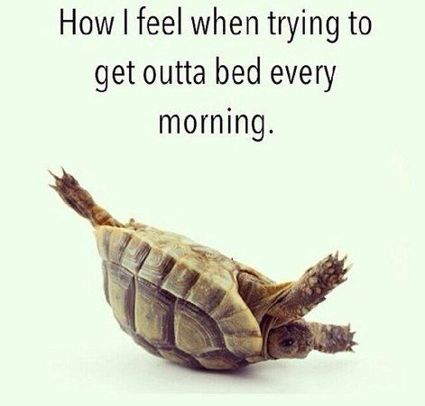Turtle - How I feel when trying to get outta bed every morning