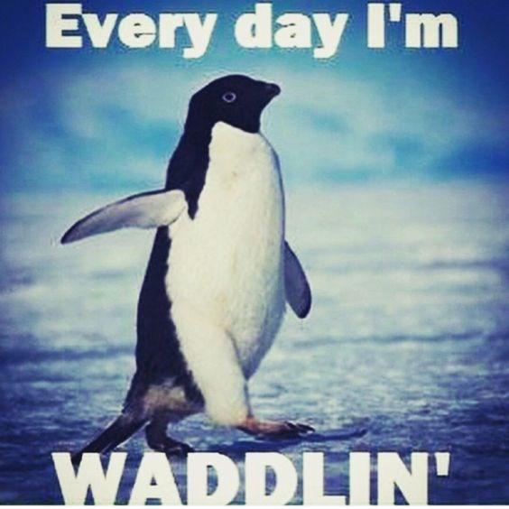 Penguin - Every day I'm WADDLIN