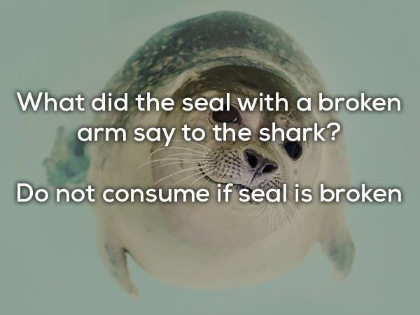 Sea turtle - What did the seal with a broken arm say to the shark? Do not consume if seal is broken