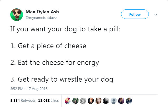 Text - Max Dylan Ash Follow @mynameisntdave If you want your dog to take a pill: 1. Get a piece of cheese 2. Eat the cheese for energy 3. Get ready to wrestle your dog 3:52 PM - 17 Aug 2016 5,834 Retweets 13,088 Likes