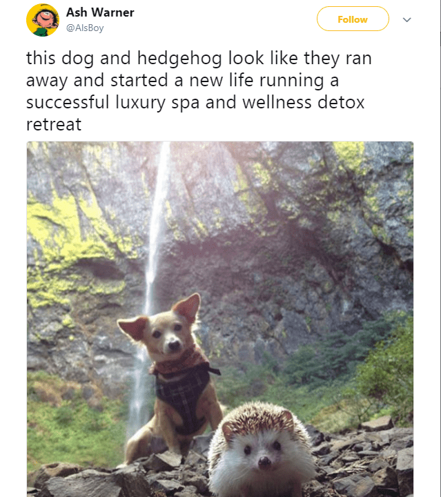 Wildlife - Ash Warner Follow @AlsBoy this dog and hedgehog look like they ran away and started a new life running a successful luxury spa and wellness detox retreat