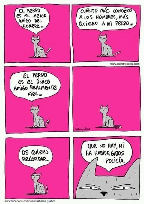 gato hace reflexion sobre el perro policia