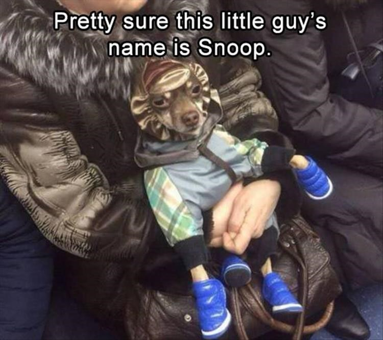 Cool - Pretty sure this little guy's name is Snoop.