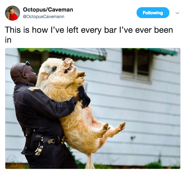 Chicken - Octopus/Caveman Following @OctopusCavemann This is how I've left every bar I've ever been in