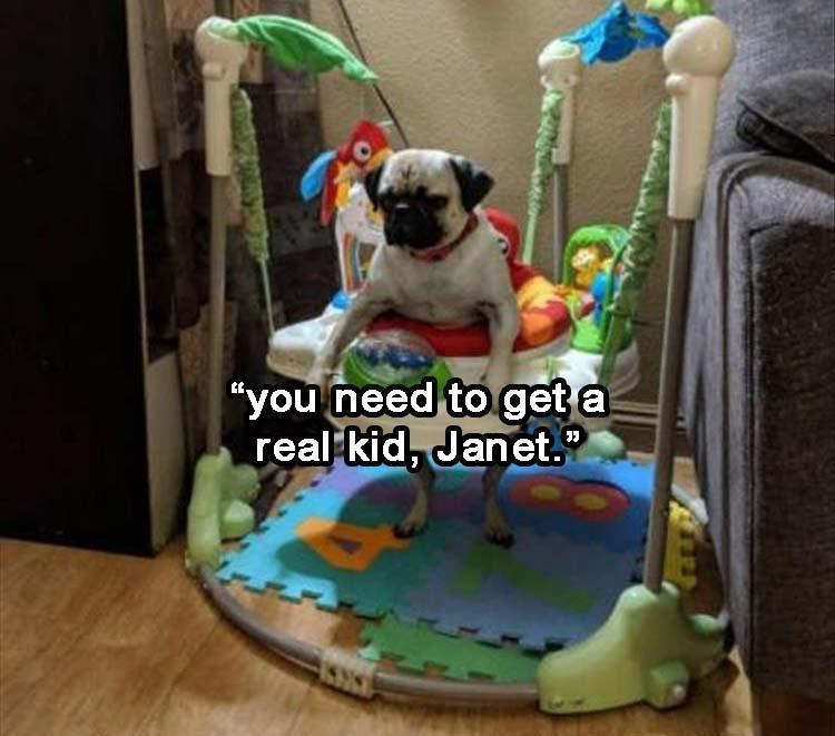 """Dog - """"you need to get a real kid, Janet."""