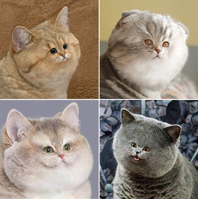 photoshopped small face - Cat