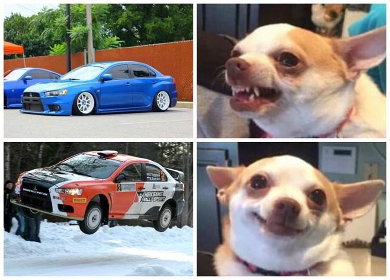 Dog - NEKSANS RALL Y SPORT r