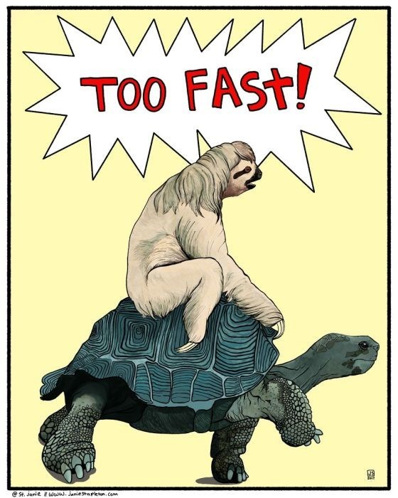 Tortoise - TOO FAST! St. Janie Nwo. Janestapletom, Com
