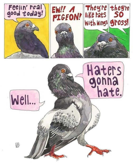 Rock dove - Feelin' real good today! They're they're EW!! A PIGFON! lke ats SO With Mings gross! Haters gohna hate Well..